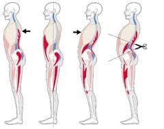 la pancia dipende dal rapporto tra diaframma e bacino