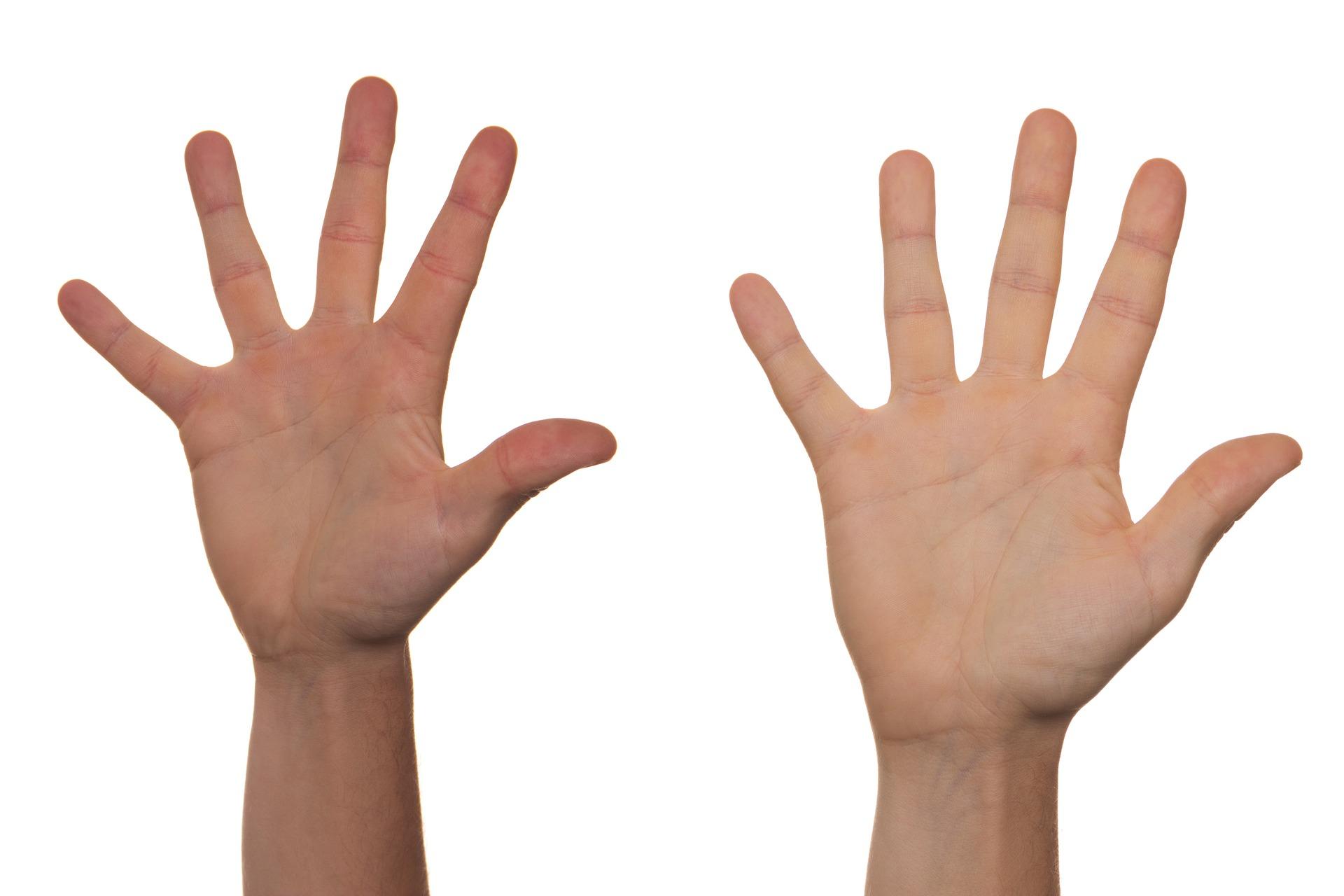 Lettura della biotipologia nel palmo della mano
